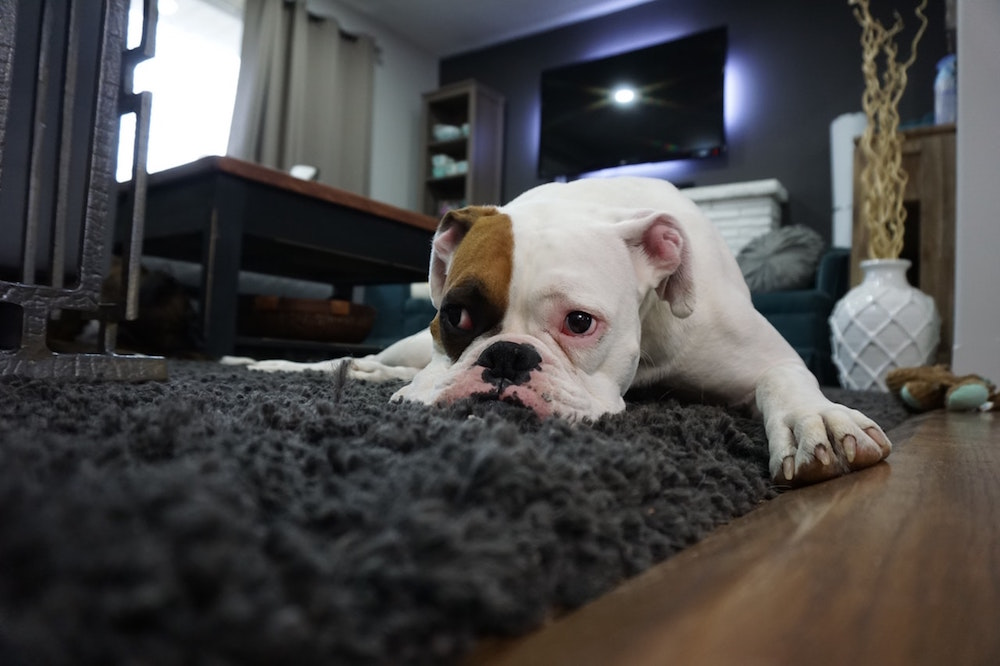 Carpet Cleaning and Maintenance for Pet Owners